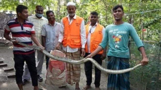 মোংলার লোকালয়ে অজগর সাপ
