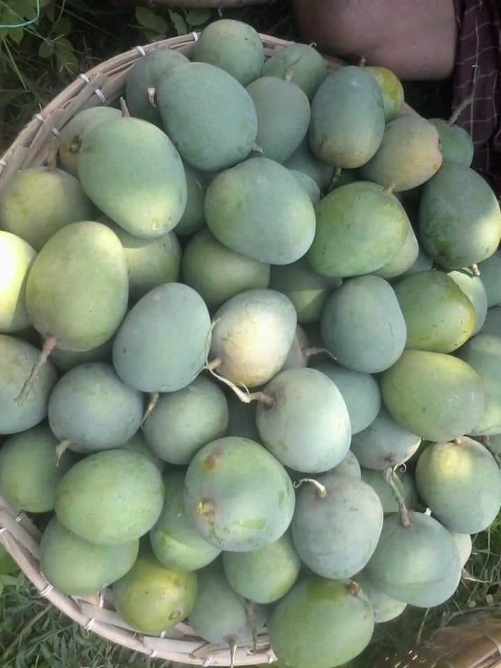 ২জুন হতে জমে উঠবে চাঁপাইনবাবগঞ্জের আম বাজার:
